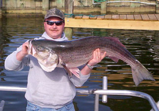 Trophy Rockfish season Solomons Maryland